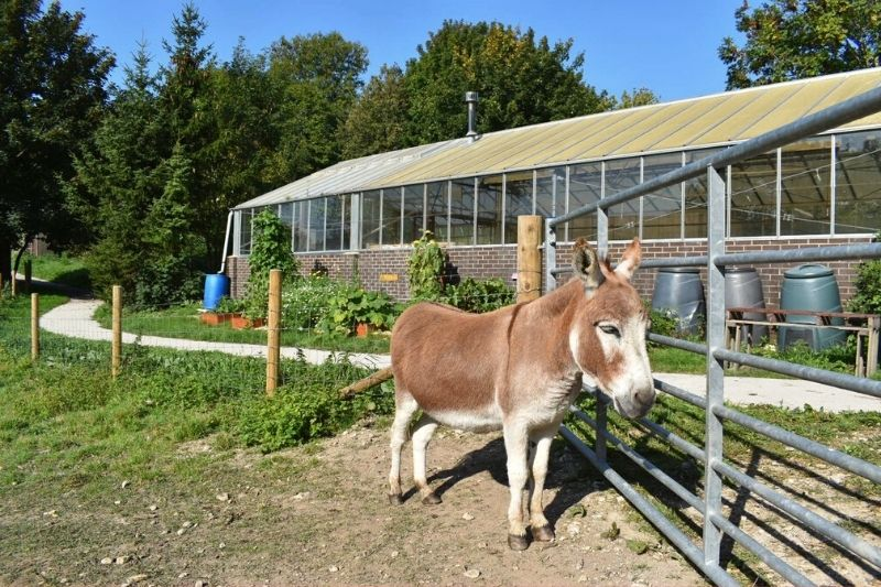 a brown and white donkey stood by a fence with a large greenhouse in the background